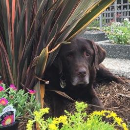 Tug, seeking shade.